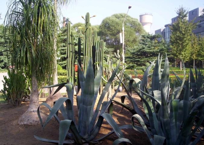 21 cactus garden.jpg