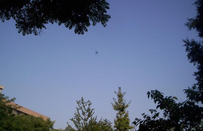 73 freaky spider 3.jpg